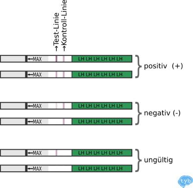 Ovulationstest positiv negativ
